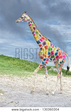 Colored Giraffe Coming To You On Deep Blue Sky Background