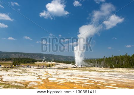 Yellowstone Geyser Old Faithful while erupting  landscape