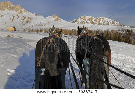 Horse Sled On The Snow