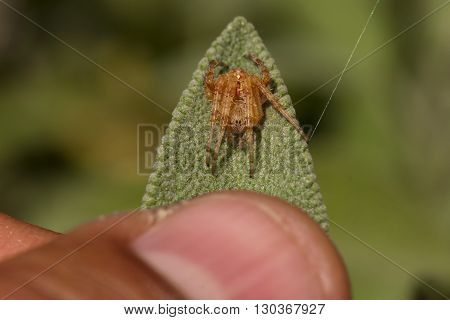 A yellow spider on pink background close up
