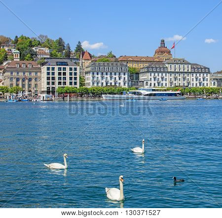 Lucerneб Switzerland - 7 May, 2016: swans on Lake Lucerne with buildings on the Schweizerhofquai quay in the background view from the Bahnhofquai quay. Lake Lucerne (German: Vierwaldstattersee) is a lake in central Switzerland.