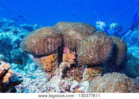 colorful hard coral macro while diving close up