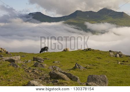 Two Sheep On The Blue Sea And Grass Cliff Background
