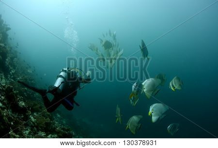 Scuba Diver Isolated Underwater