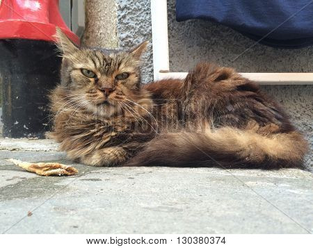 Cat With Fish While Resting In Vernazza Harbor