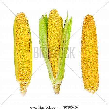 Fresh organic corn on the white background