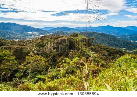 Hills In Cameron Highlands, Malaysia