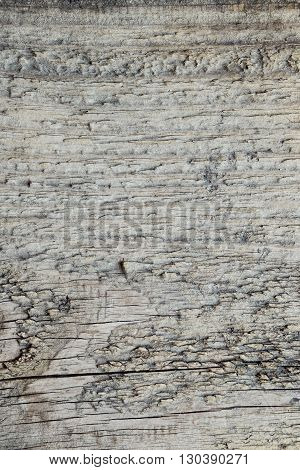 A beautiful gray old wood texture background