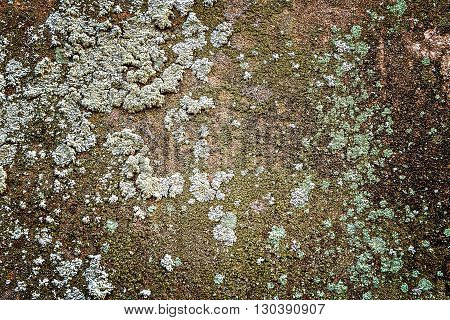 Rough and dirty concrete wall with stain of lichen and mold
