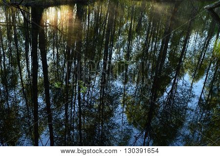 Earlier spring morning surface water forest river