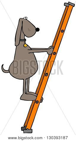 Illustration of a brown dog standing on an orange fiberglass ladder.