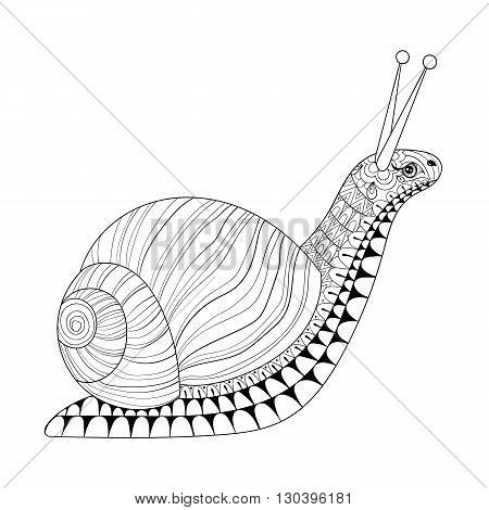 Hand drawn zentangle Snail for adult anti stress colouring pages, post card, mehendi t-shirt print, logo icon. Isolated animal illustration in doodle, boho style, henna tattoo design.