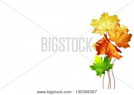 abstract background of autumn leaves. Autumn leaves isolated on white background