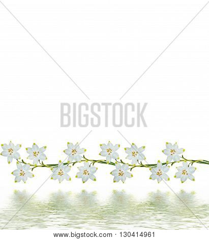 spring flowers snowdrops isolated on white background. Delicate flower