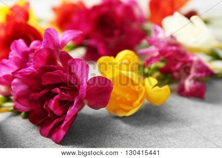 Beautiful freesia flowers on grey textured surface closeup