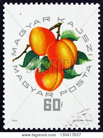 HUNGARY - CIRCA 1964: a stamp printed in the Hungary shows Apricot Prunus Armeniaca Fruit circa 1964
