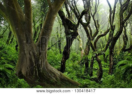 Tropical jungle in Thailand with twisted trees