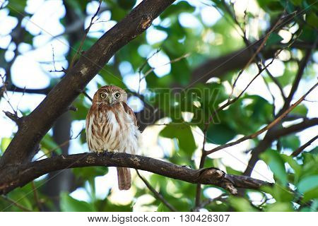 small owl sit on tree during day