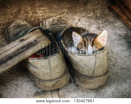 Cute little kitten hiding in the old shoe over grey background.