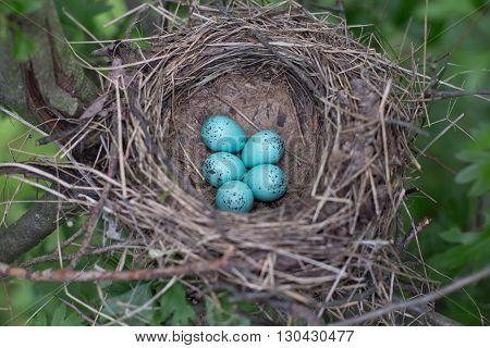 Bird's nest in their natural habitat in the summer.