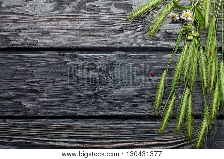 Field green grass and bunch of daisy with red ladybird on dark textured wooden background copy space