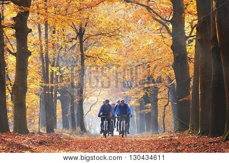 Ermelo, The Netherlands - October 31, 2015: A group of six male friends cycling on mountainbike in the morning fog on sunday morning on a path through the forest in autumn.
