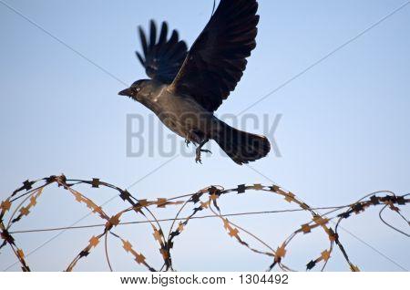 Bondage And Freedom