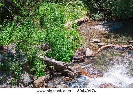 Mountain stream in the green forest in spring.