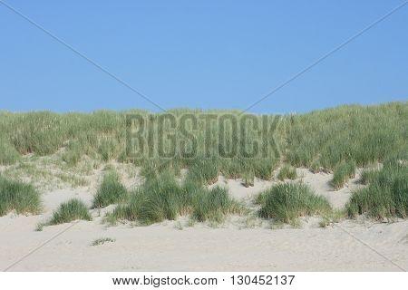 Dunes along the North Sea coast in Belgium