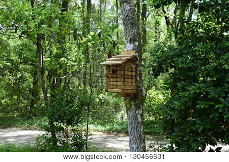 Wooden Bird House on a Tree in the Butterfly Garden at Florida State Park in the Springtime.