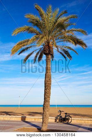 Valencia La Malvarrosa beach palm trees promenade in Spain