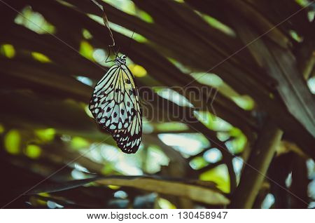 Butterfly perched on palm leaf, wings are hanging down  some light bokeh on background