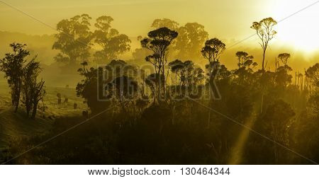 Aerial sunrise  with fog or mist at the treetops in the rural countryside looking moody dramatic Croajingolong National Park, Australia