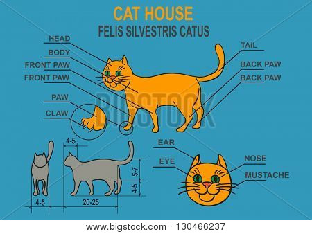 Cat home. Schematic representation of a domestic cat. Description of the organism. Infographic.