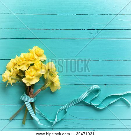 Bunch of yellow narcissus or daffodil flowers on turquoise wooden background. Selective focus. Place for text. Flat lay. Square image.