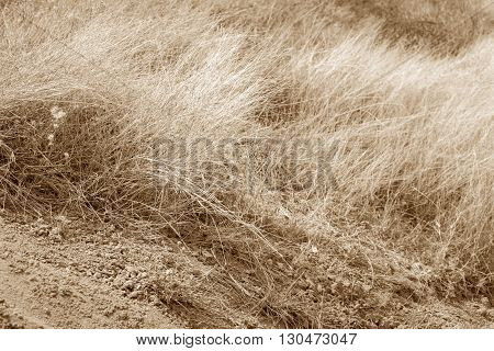 dry grass and dry earth earth tone edited abstract background