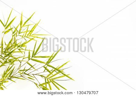 A Bamboo leaves Isolated on white background