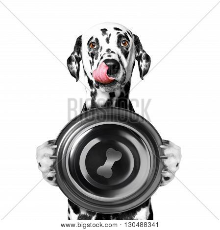 dog wants to eat and hold a bowl -- isolated on white