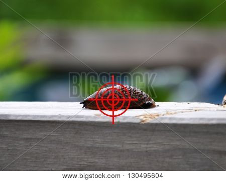 Colorful and crisp image of aim at slug in garden