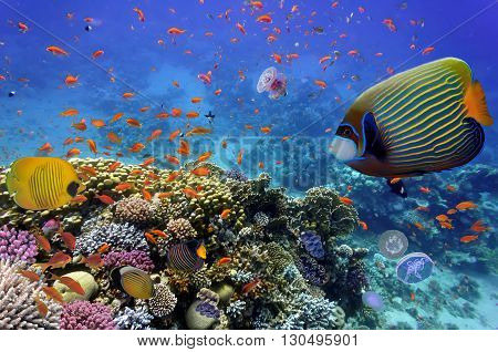 Coral Reef and Tropical Fish in the Red Sea Egypt