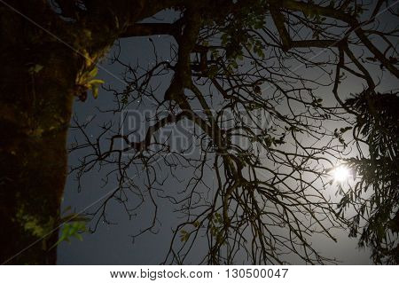 SILHOUETTE OF TREE BRANCH FROM EARLY MORNING MOON AND STARSHINE