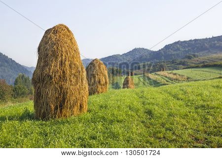 Dozens of hay on a meadow in Pieniny Mountains.
