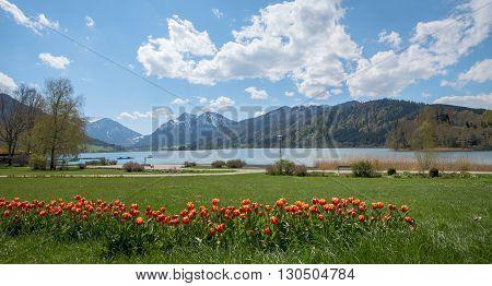 Spa Gardens Schliersee With Tulip Flowerbed