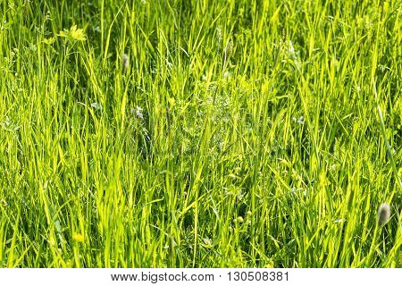 sunny illuminated grassland scenery at springtime in Southern Germany