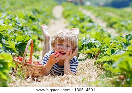 Happy blond little kid boy picking and eating strawberries on organic bio berry farm in summer, on warm sunny day. Harvest fields in Europe.