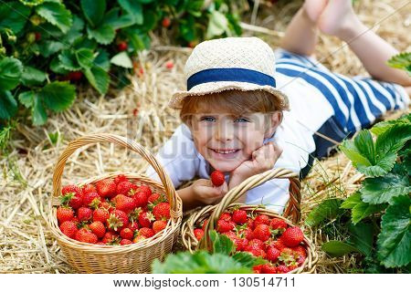 Happy blond little kid boy picking and eating strawberries on organic bio berry farm in summer, child on warm sunny day. Harvest fields in Europe.