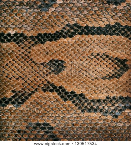 Snake skin texture as a background close-up.