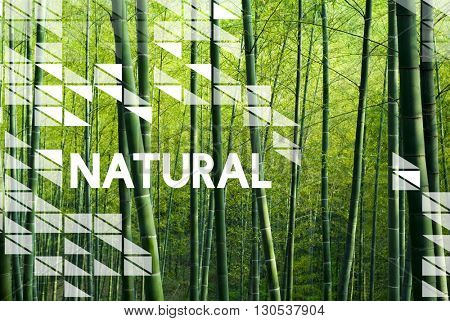 Natural Environment Resources Nature Plants Concept