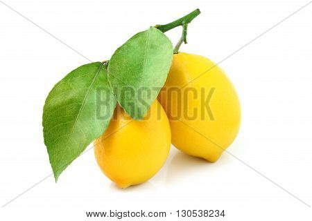 Two lemons on a branch isolated on white background.