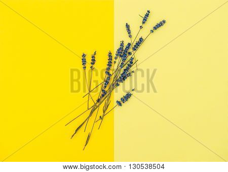 Dried lavender flowers on yellow background. Minimal concept. Flat lay